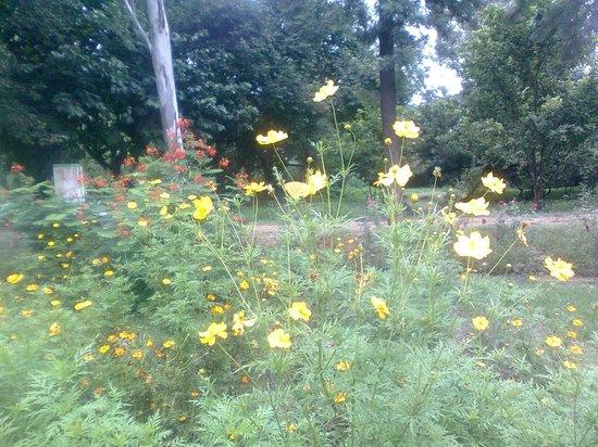 Flores de mariposa FafardEasy