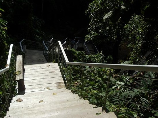 Belum Rainforest Resort: walkway to garden