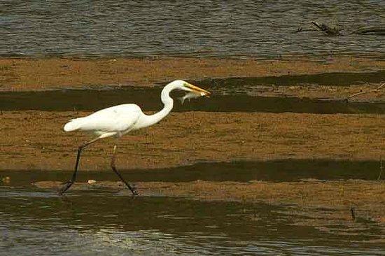 Shizen taiken gakusyu nature mirai kan: Egret with Fish