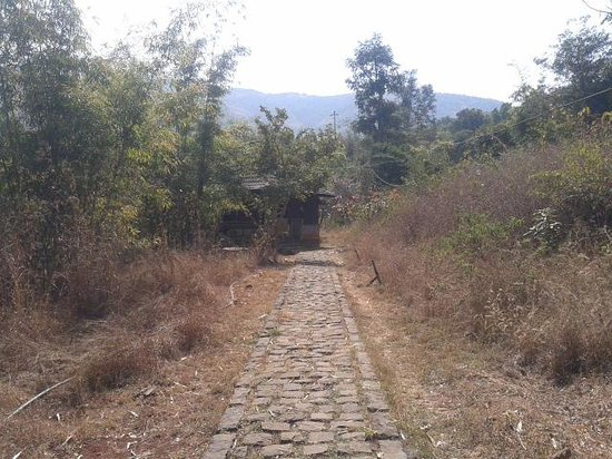 Paradise Country:                   way to the kerala cottage