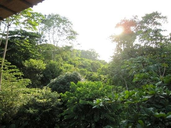 El Remanso Lodge:                                     The rain forest