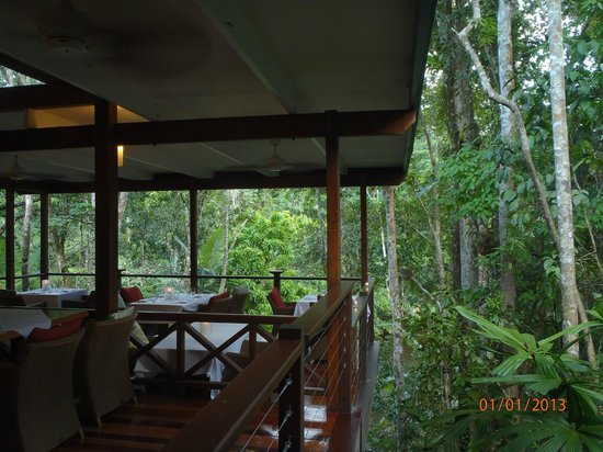 Treehouse Restaurant:                   Silky Oaks Restaurant in the rainforest