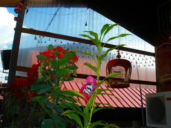 Chew Jetty:                   more potted plants