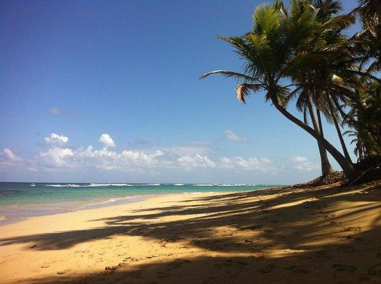 Sirenis Punta Cana Resort Casino & Aquagames:                   Plage à côté de l'hôtel