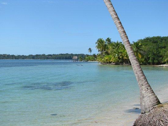 Hotel Palma Royale:                                     Bocas del Drago's beach