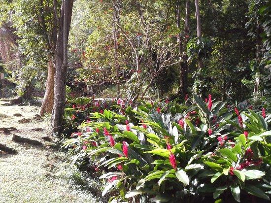 Man-O-War Bay Cottages:                                     back to nature
