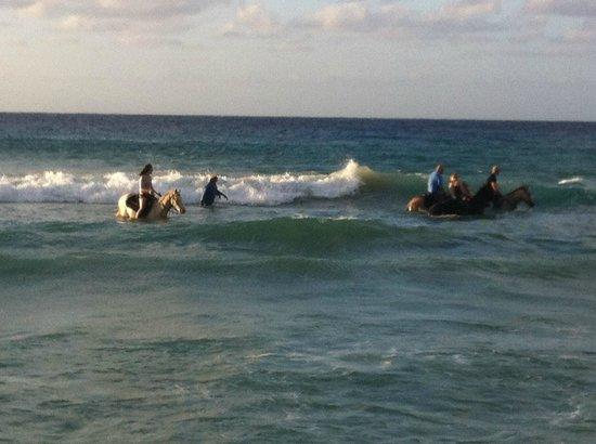 Equus Rides:                                                                                           This t