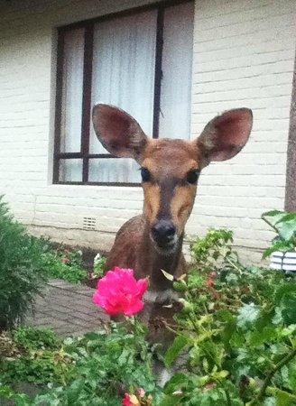 Cloverleigh Guest House:                   garden visitor