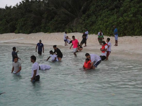 Coco Bodu Hithi:                   training of staffs for life saving