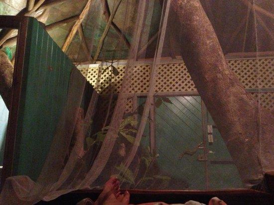 Posada Andrea Cristina:                   Treehouse
