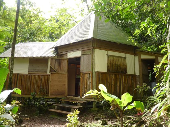 "Roots Jungle Retreat:                   notre ""cabane"""