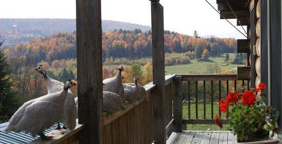 Perry Family Farm: Relax on the farm