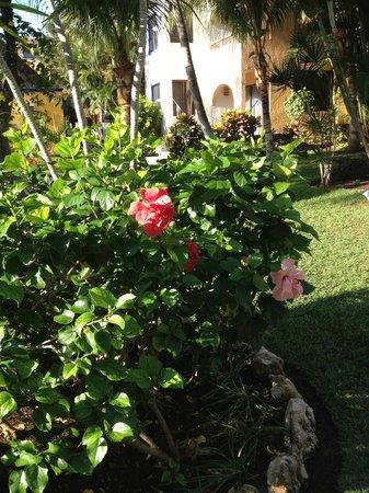 Real Playa del Carmen:                                     Hibiskus