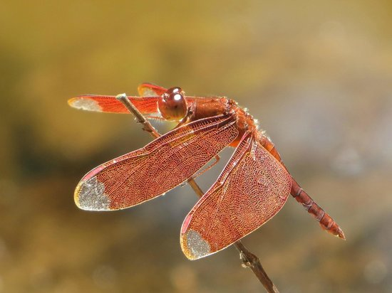 Zen Namkhan Boutique Resort:                   red dragonflies