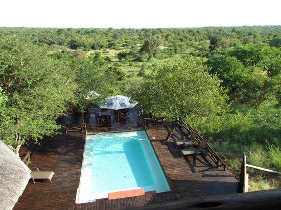Naledi Bushcamp and Enkoveni Camp:                   Poolarea