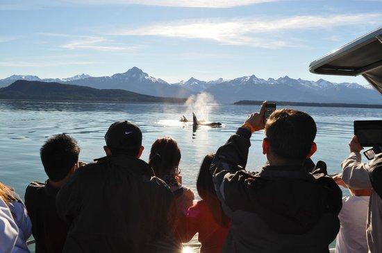 Alaska Tour Center