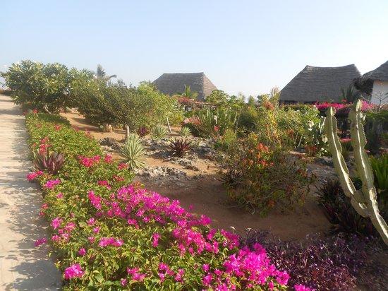 Jacaranda Beach Resort:                   vista giardino