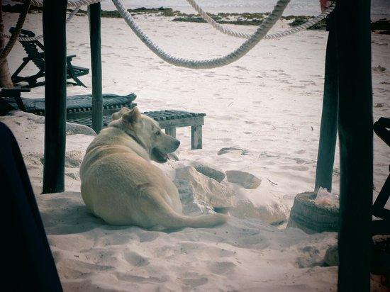 La Vita e Bella:                                     Dog relaxing in the restaurant at breakfast time