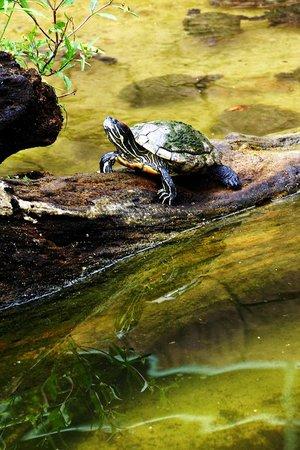 Emperor Valley Zoo:                   Turtle