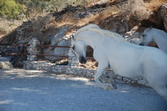 Canillas de Albaida, Spain:                   Los Caballos del Mosquin