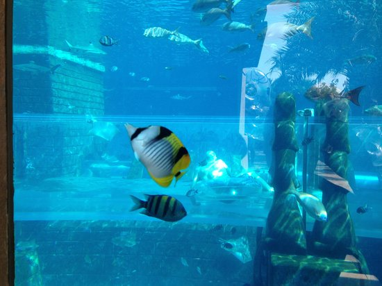 slide under water tunnel with fishes picture of atlantis the palm