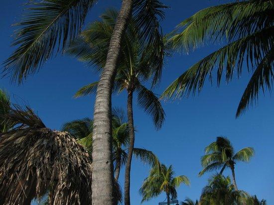 Hilton Aruba Caribbean Resort & Casino:                   Beautiful scenery                 