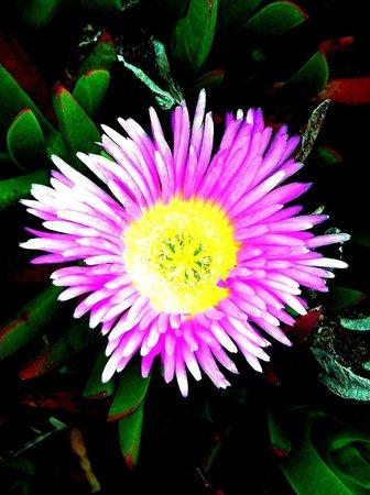 Botanical Garden:                   Purple