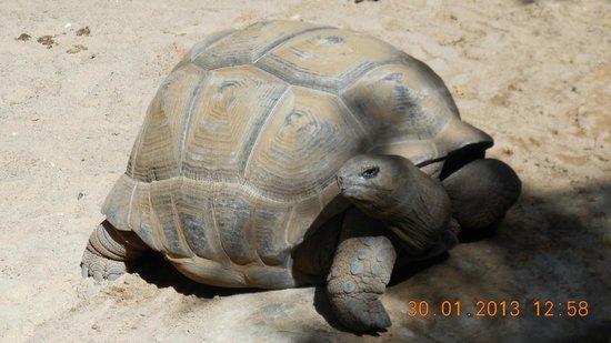 Palmitos Park:                   Schildi