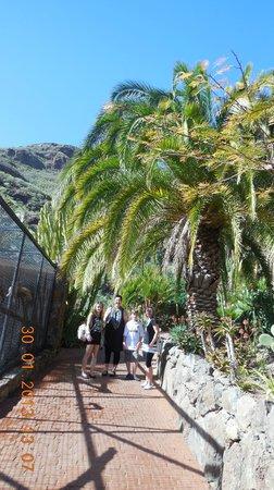 Palmitos Park:                   Palmen im Park