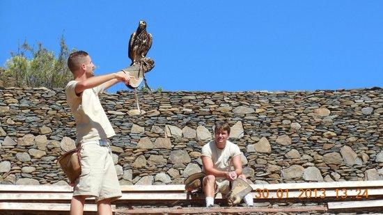 Palmitos Park:                   Adlershow