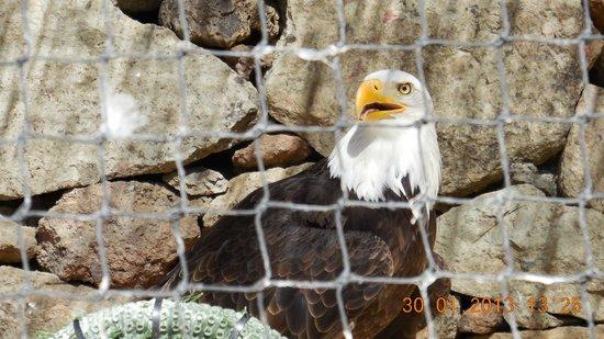 Palmitos Park:                   Adler