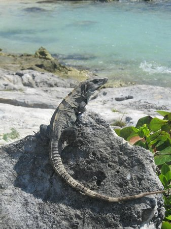 Grand Sirenis Riviera Maya Resort & Spa:                   One of many friends around the resort