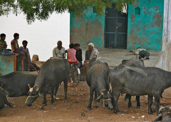 Chini Ka Rauza Mausoleum :                   watterbuffels