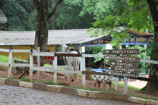 Hotel Fazenda Solar das Andorinhas :                   Baia dos Cavalos