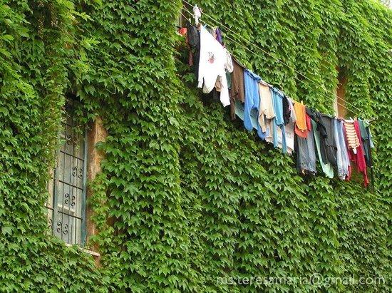 Hotel Residenza San Calisto: Rome nice street in trastevere