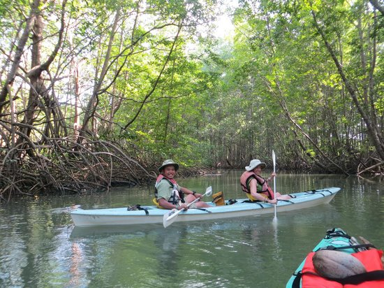 Aventuras Tropicales Golfo Dulce: kayaking in the mangroves of Puerto Jimenez!