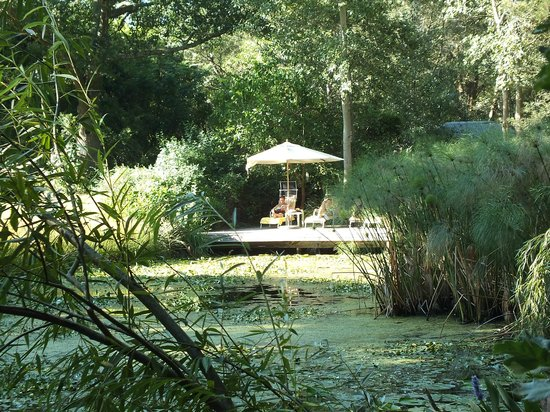 Bloomestate :                   prachtige vijver in de tuin achter het hotel