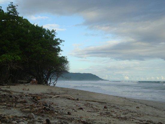 Hotel Raratonga:                   Beach