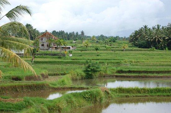 Villa Orchid Bali:                                                       Photo prise d'une fenêtre de la chambre