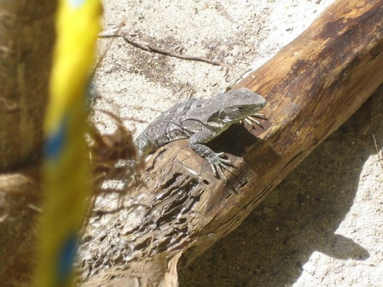 Colinda Cabanas:                                     A friendly lizard that came to say Hi