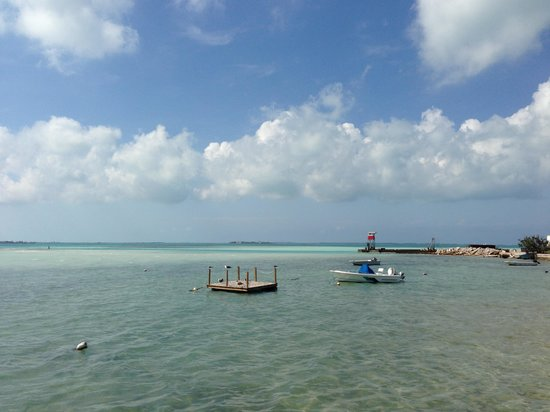 Queen Conch :                                     The View from the deck