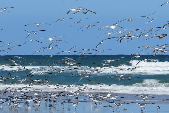 Beach at Daytona Beach:                   BEACH
