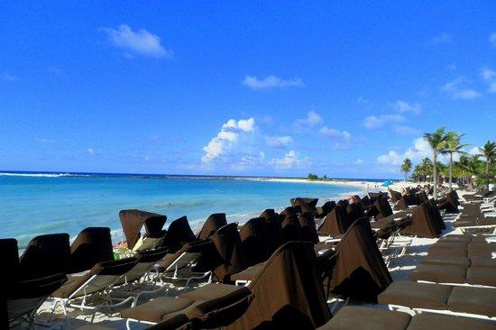 ذا ريف أتلانتيس أوتوجراف كوليكشن:                                     Private beach for The Reef and The Cove                   