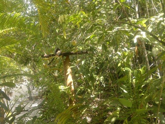 Condomínio Dos Nativos:                                     Monitos Saui