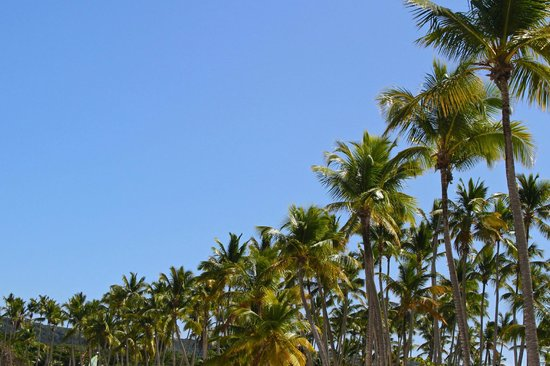 Grand Paradise Samana:                   Palm Trees line the area