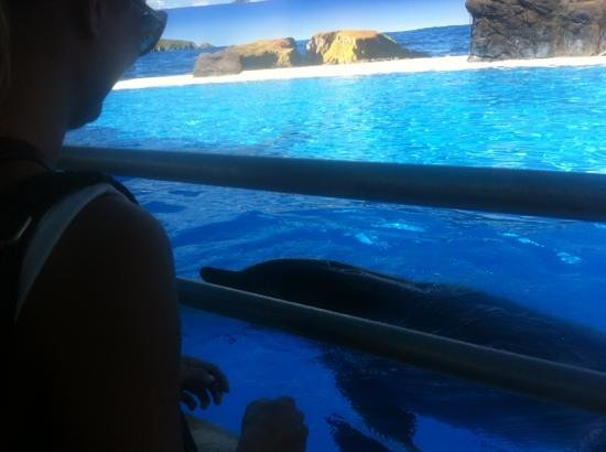 Pet Porpoise Pool - Dolphin Marine Magic :                   delfin