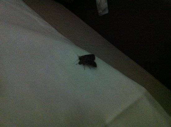Hotel Sophia:                   the moth