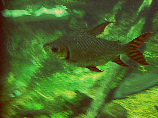 Nashville Zoo:                   A fish!