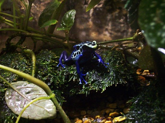 Nashville Zoo:                   I loved the colors of this frog!