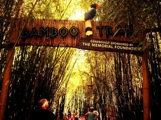 Nashville Zoo:                   The Bamboo trail!